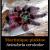 species-avicularia-versicolor
